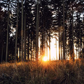 Fondo forestal vintage — Foto de Stock