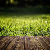 spring green grass  — Stock Photo