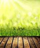 Grass with green bokeh — Foto Stock