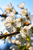 flowers on a spring day — Stock Photo