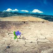 Dry landy — Stock Photo