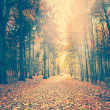 Autumn forest — Stock Photo #50856589
