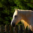 Stock Photo: Beautiful horse at dusk