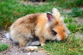 Cute little rabbit — Stock Photo