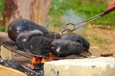 Eggplants on campfire — Stock Photo
