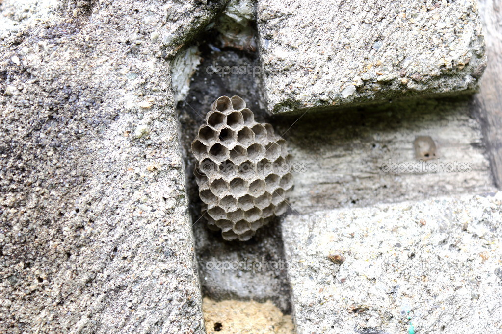 Detail of old honeycomb on concrete niche — Stock Photo #12201397