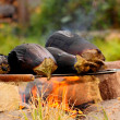Campfire barbecue — Stock Photo