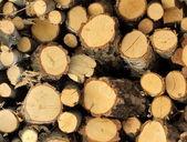 Vecchio modello di legno listone — Foto Stock