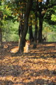 Young fallow deer — Stock Photo