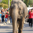 Elephant in the street — Stock Photo
