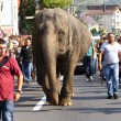 Elephant on the road — Stock Photo