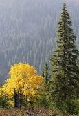 Maple tree in autumn — Stock Photo