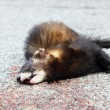 Dead animal on the road — Stock Photo