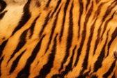 De piel de tigre con textura — Foto de Stock