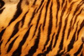 Textured tiger fur — Foto Stock