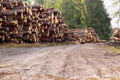 Rural road with bunch of felled trees — Stock Photo