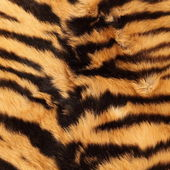 Stripes on a tiger pelt — Stock Photo