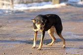 Hund på en lantlig väg — Stockfoto