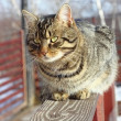 Striped cat on the fence — Stock Photo