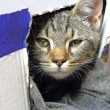 Cat in carton box — Stock Photo #21289043