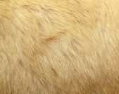 Detail of polar bear fur — Stock Photo
