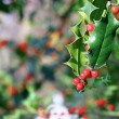 Stock Photo: Ilex aquifolium red berries