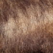 Sus scrofa textured fur — Stock Photo