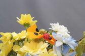 Flower arrangement with ladybug — Stock Photo