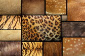 Collection of textured - animal fur — Stock Photo