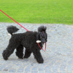 Ugly black dog — Stock Photo #26347889