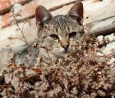 Gatinho curioso descansar ao meio-dia — Fotografia Stock