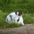 Little white rabbit hiding in the grass — Stock Photo