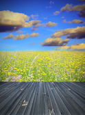 Old wood floor and field with flowers — Stock Photo