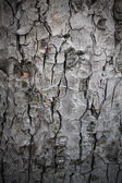 Natural structure of bark — Stockfoto