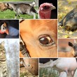 Collection of farm animals — Stock Photo
