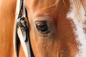 Detail of beautiful horse eye — Stock Photo