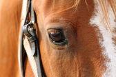 Detail of beautiful horse eye — ストック写真