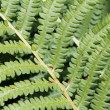 Green bracken textured foliage — Stock Photo #35136183
