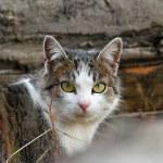 Domestic mottled cat — Stock Photo #36448811