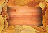 Fall backdrop foliage frame — Stock fotografie