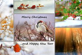 Winter greeting card — 图库照片