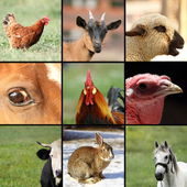 Collection of images with farm animals — Stock Photo