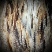 Eurasian eagle owl plumage — Stock Photo