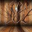 Hunting trophies on wood — Stock Photo