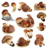 Collection of fungi porcini ready for cooking — Stock Photo