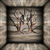 Hunting trophies on wooden room — Stock Photo
