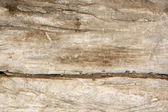 Old texture of wood — Stock Photo