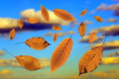 Falling leaves over the sky — Foto Stock