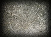 Abstract view of oak wood fibers — Stock Photo