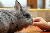 Child hand feeding rabbit — Stock Photo